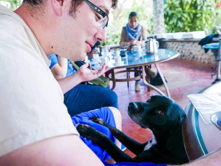 dog boquete coffee tour