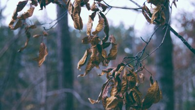 Dry Leaves of Winter and the second semester