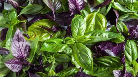Basil leaves, a food with omega-3
