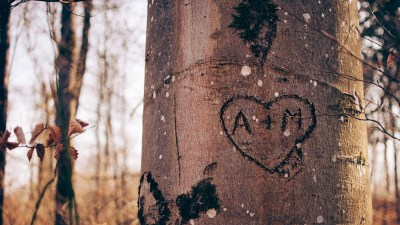 Names of couple carved into a tree