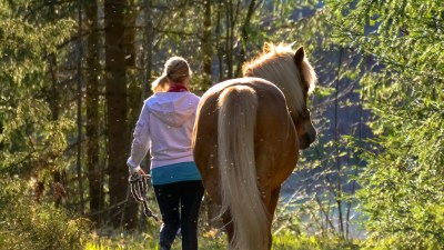 Equine-assisted therapy for adults with ADHD
