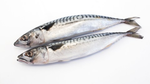Omega 3 fatty acids from these fish can help some people with adhd manage their symptoms without medication.