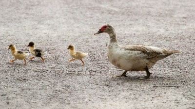 Get your ducks in a line for back to school