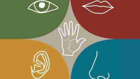 Illustrations of the five senses involved in a sensory diet for children with ADHD