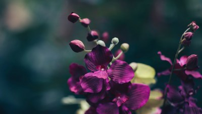 Memory of purple orchids