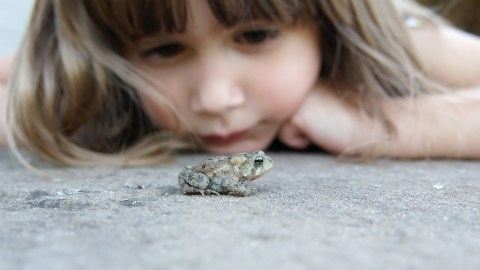 girl watching a toad