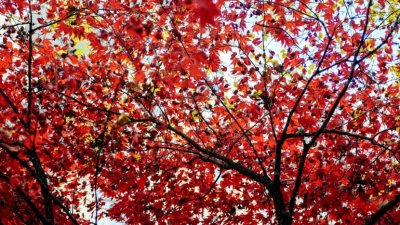 red trees, symbolizing fall and the start of a new school year, adhd and feeling like a failure