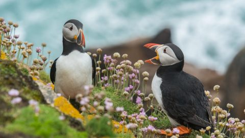 two puffins who seem to be talking represent the need to learn to listen and explain, rather than argue and make excuses