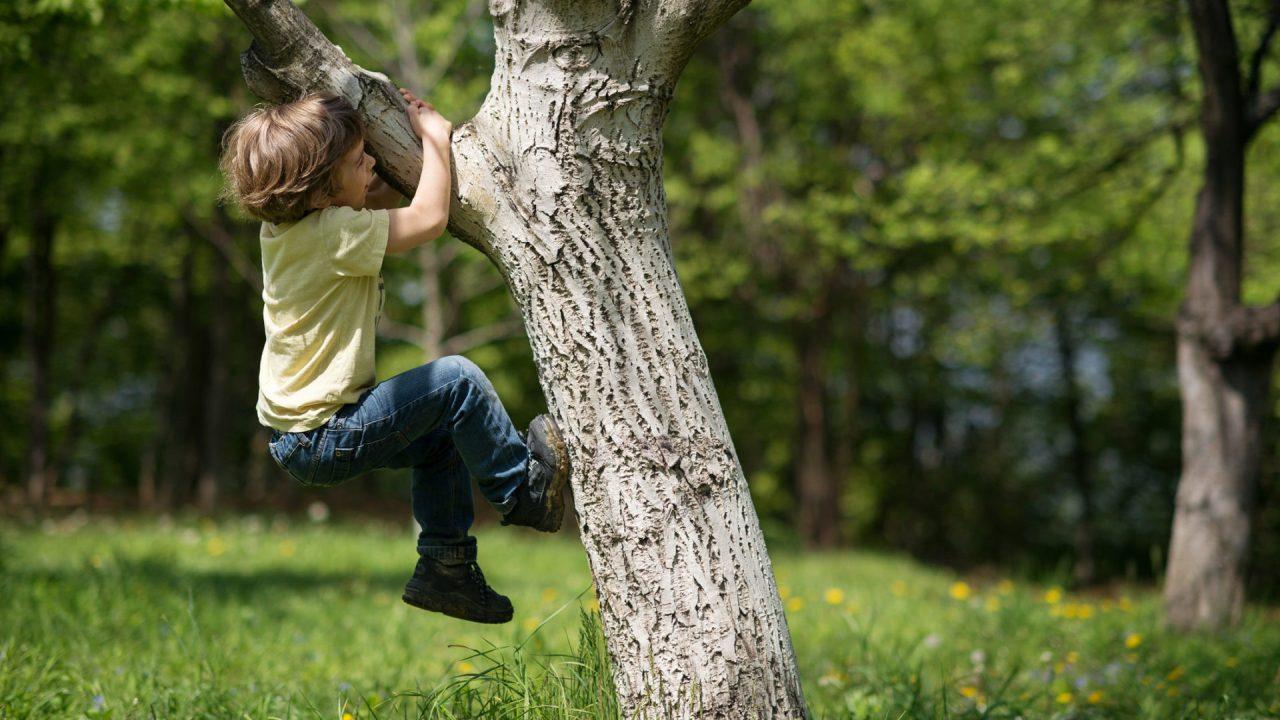 Little boy climbing a tree.