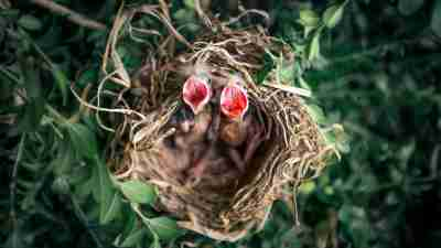 A not-so-empty ADHD nest of baby birds