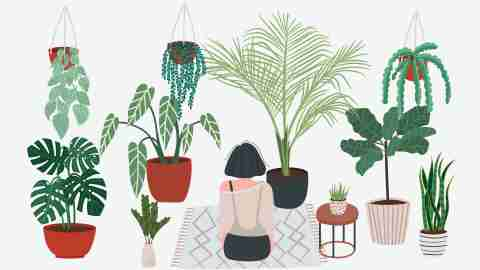all or nothing; depiction of intense hobbie - woman in a room filled with plants