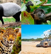 Miles de hectáreas ecológicas serán protegidas en el Caribe Panameño 3