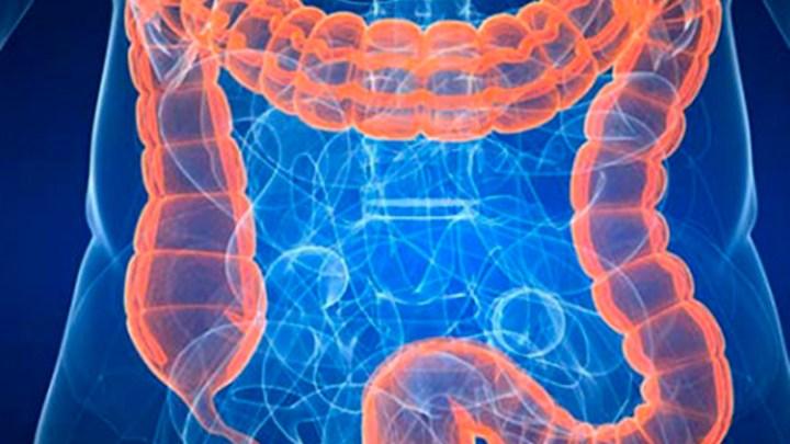 """""""Tras los antibióticos, la actividad metabólica de la flora intestinal queda dañada"""" 1"""