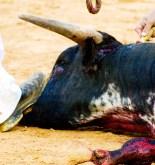 El maltrato animal en España 3