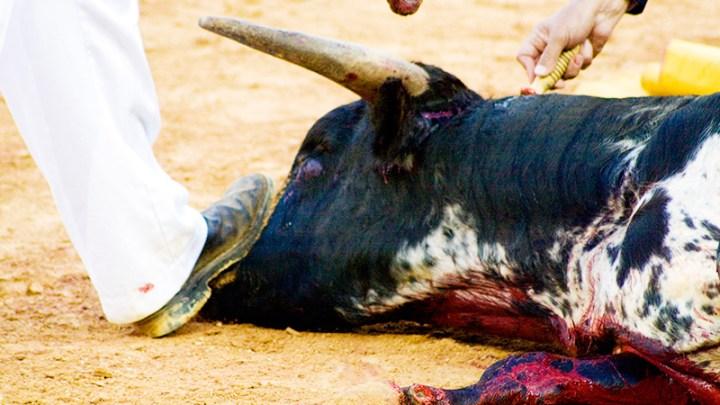 El maltrato animal en España 1