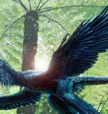 Las plumas no fueron creadas para el vuelo 4
