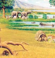 Un paisaje del Plioceno en Murcia, hace 5 millones de años 5