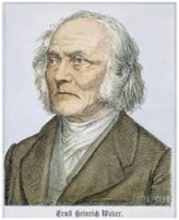 Ernst Weber