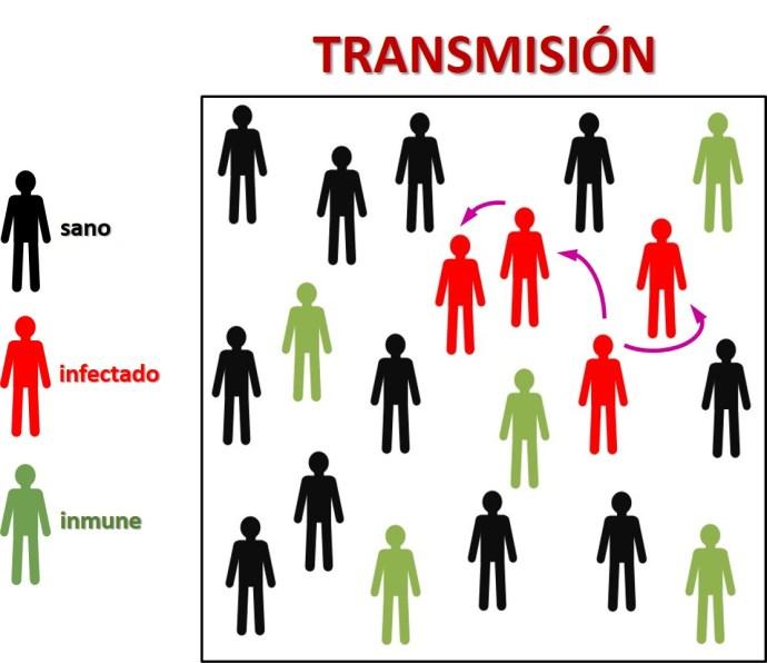 Cadenas de transmisión. Los infectados contagian a las personas sanas susceptibles, tanto más cuantos más contactos se den. Las personas inmunizadas no enferman y además hacen de cortafuegos. (Ilustración cortesía de Antonio Guirao)