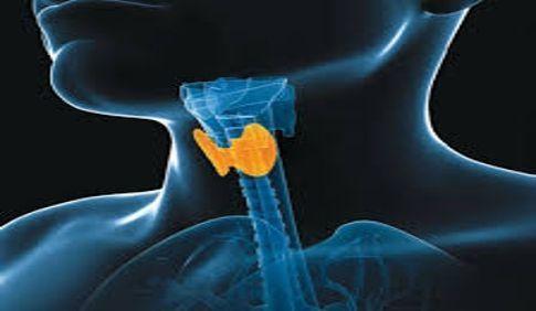 Hipotiroidismo y el aumento de peso