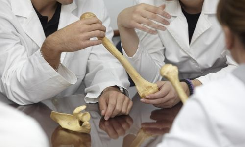 Nuestros huesos y las articulaciones