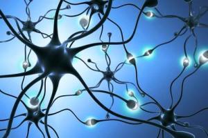 La serotonina influye en la saciedad