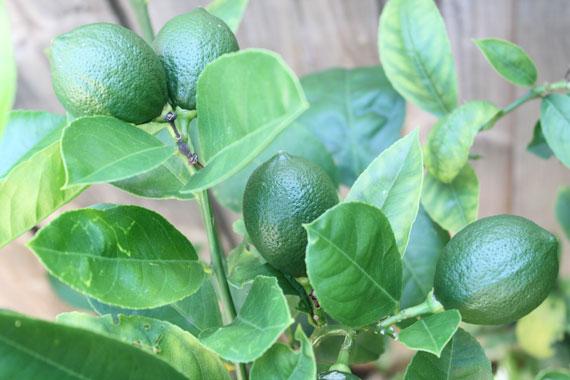 My garden produce