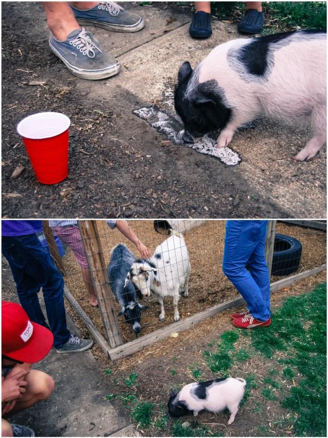 A Denver Home Companion | backyard bbqs