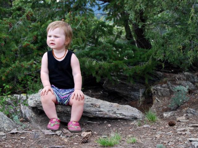 A Denver Home Companion   Elk Meadows Bark Park