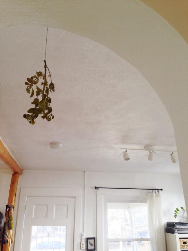 A Denver Home Companion   mistletoe