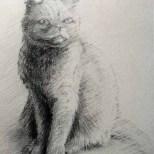 Genie pencil sketch