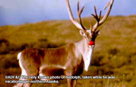 Photo of a Santa's Reindeer