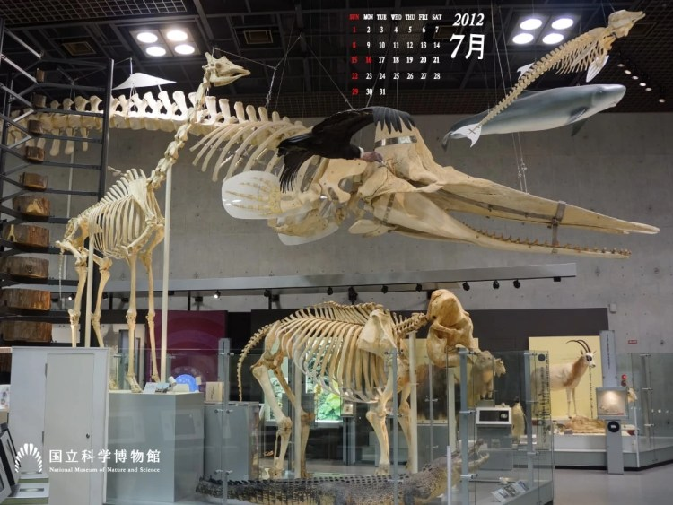 adf-web-magazine-national-museum-of-nature-and-science-vr+3d-3