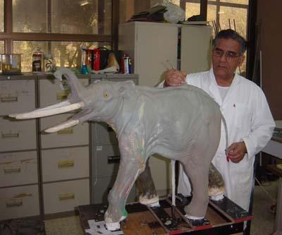 Work in progress on the four-tusked elephant Stegotetrabelodon syrticus.jpg