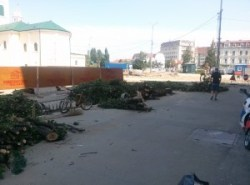 copaci taiati 30 iunie 2015 (1)