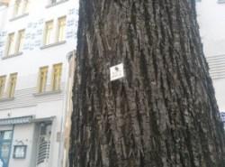 pomi numerotati la Viena (2)