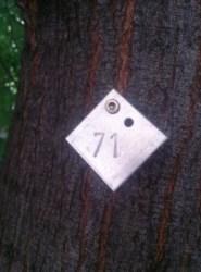 pomi numerotati la Viena (5)