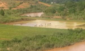 Oameni cultiva orez langa parcul cu lemurieni in Madagascar