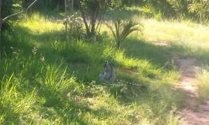 Lemurian 2 Madagascar