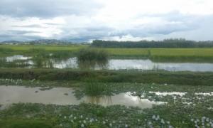 apa pe campuri sezon ploios Madagascar