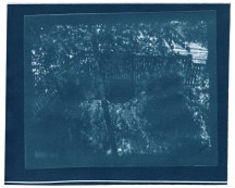 "Summer, cyanotype contact print of graphite drawing on vellum, 8"" x 10"", 2015"