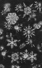 TOS_snowflakes