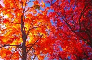 Image result for fall foliage new york