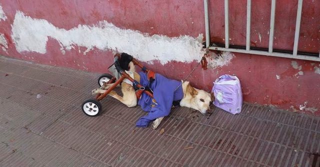 Paralyzed Dog gets deserted on a street