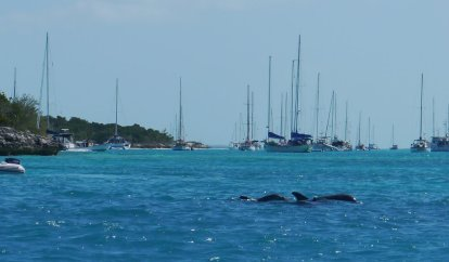 Atlantic Bottlenose Dolphins in our anchorage at the Monument, George Town, Exuma