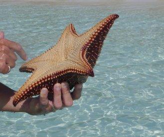 Cushion sea star underneath