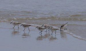 Family of wading birds on beach