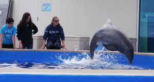 Marineland dolphin experience