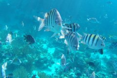 Sea Aquarium