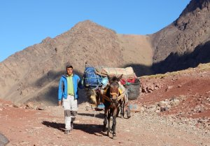 Noredine and one of the mules